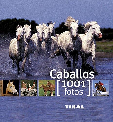 Caballos (1001 Fotos)