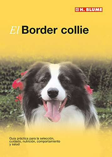 El Border collie (Mascotas)